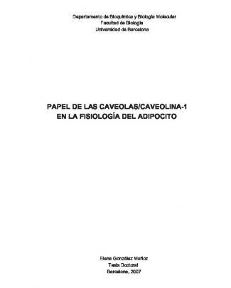 Papel De Las Caveolas/caveolina-1 En La Fisiología Del Adipocito