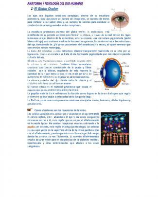 Clase 2 - Anatomia Y Fisiología Del Ojo Humano