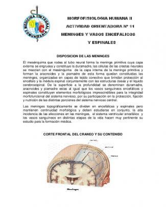Morfofisiologia Humana Ii Actividad Orientadora Nº 11 Meninges Y